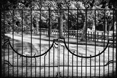 Metal swing gates to long driveway lined with trees, image in black and white